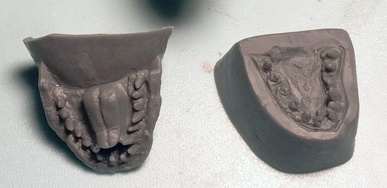 上顎の牙と下顎パーツ